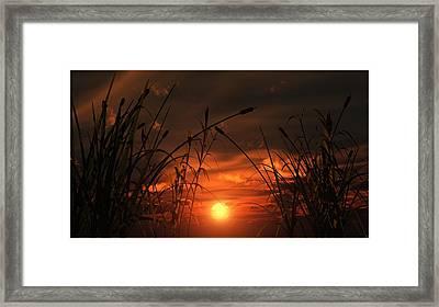 Swamp Sunset  Framed Print by Tim Fillingim