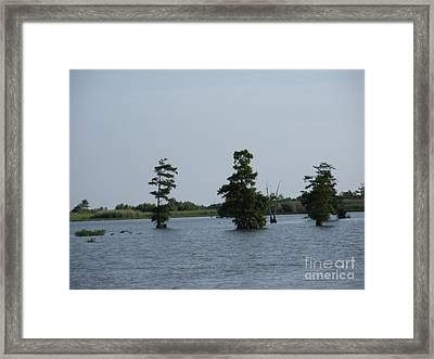 Framed Print featuring the photograph Swamp Tall Cypress Trees  by Joseph Baril