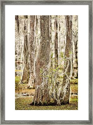 Swamp Trees Framed Print