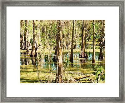Swamp Wading 1 Framed Print by Van Ness