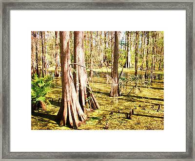 Swamp Wading 3 Framed Print by Van Ness