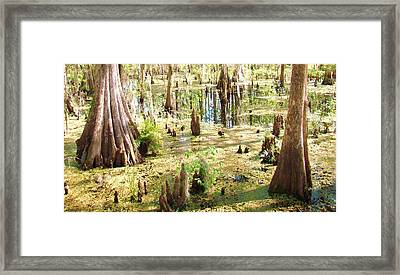 Swamp Wading 6 Framed Print by Van Ness