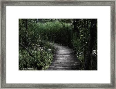 Swamp Walk Framed Print by Glenn Thompson