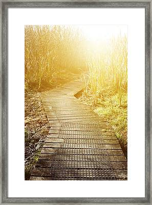 Swamp Walk Framed Print by Les Cunliffe