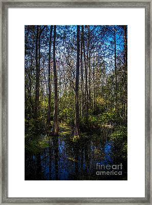 Swampland Framed Print by Marvin Spates