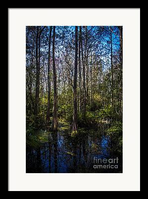 Bald Cypress Framed Prints