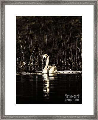 Framed Print featuring the photograph Swan B/w by Rose-Maries Pictures
