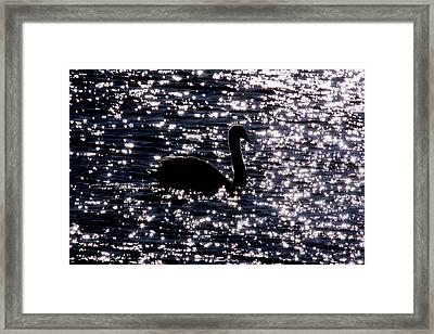 Swan Bay Framed Print