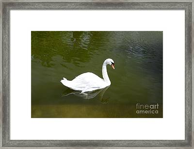 Swan Framed Print by Bernard Jaubert