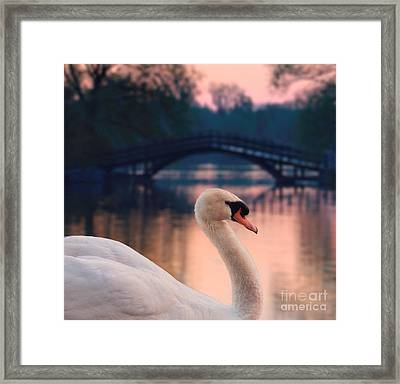 Swan Bridge Framed Print