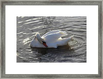 Swan By The Lake # 2 Framed Print by Jeanette Rode Dybdahl