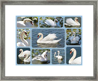 Swan Collage In Blue Framed Print