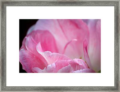 Framed Print featuring the photograph Swan Dance by The Art Of Marilyn Ridoutt-Greene