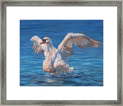 Swan Framed Print by David Stribbling