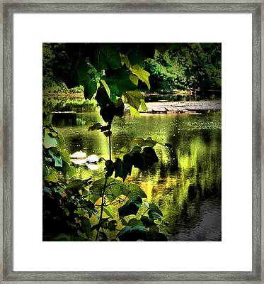 Swan Dive Framed Print by Robert McCubbin