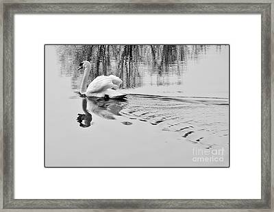Swan Elegance Framed Print by Simona Ghidini