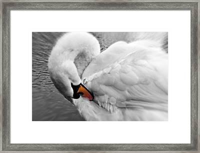 Swan Elegant Framed Print
