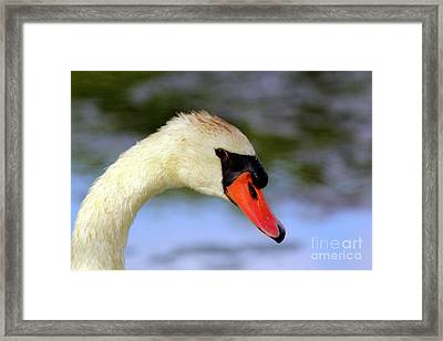 Swan Head Shot Framed Print