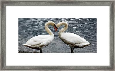 Swan Heart 2 Framed Print