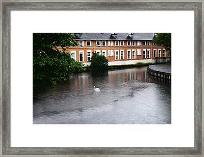 Swan In Dublin Framed Print