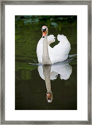 Framed Print featuring the photograph Swan In Motion by Gary Slawsky