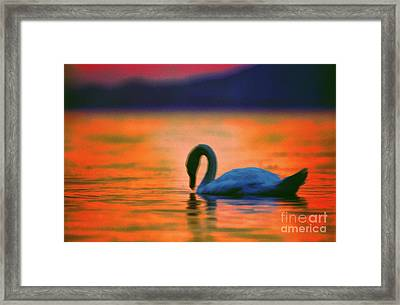 Swan In The Balaton Lake Framed Print by Odon Czintos
