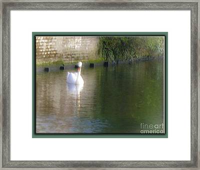 Framed Print featuring the photograph Swan In The Canal by Victoria Harrington