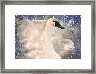 Swan Journey Framed Print