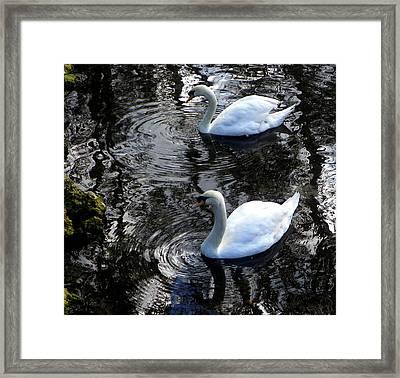 Swan Lake 1 Framed Print