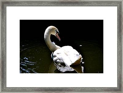Swan Lake Framed Print by Deena Stoddard