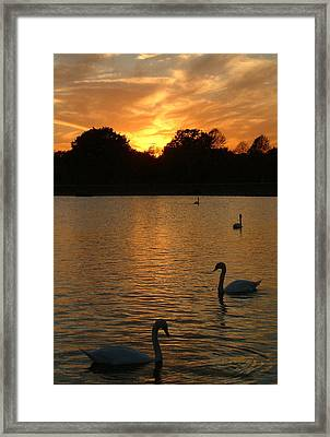Swan Lake Framed Print by John Topman