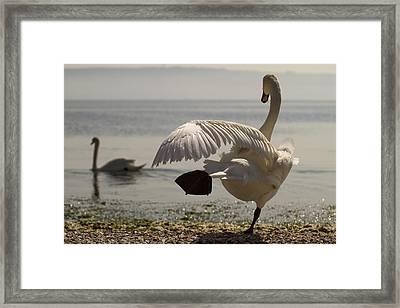 Swan Lake Framed Print by Karim SAARI