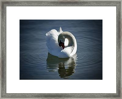 Framed Print featuring the photograph Swan Lake by Pennie  McCracken
