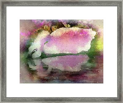 Swan Lake Reflection Framed Print by Jill Balsam