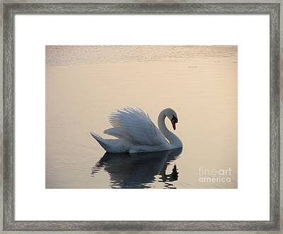 Swan On A Lake Framed Print by Sophia Elisseeva