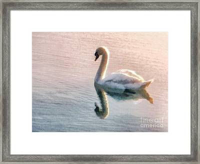 Swan On Lake Framed Print by Pixel  Chimp