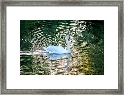 Framed Print featuring the photograph Swan On Water  by Trace Kittrell