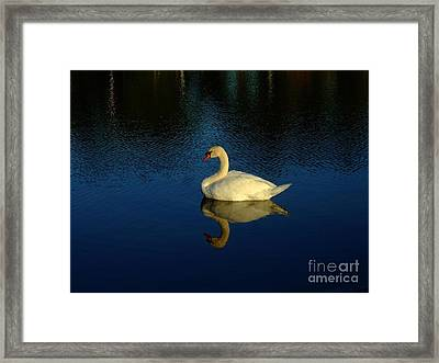 Swan Reflection Framed Print by Bob Sample