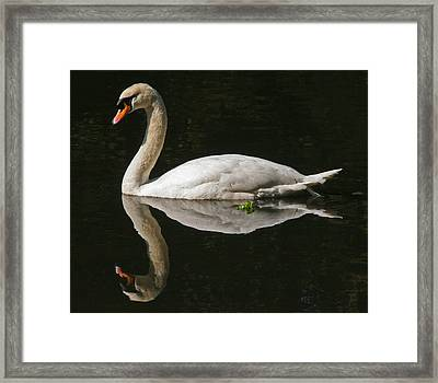 Swan Reflection Framed Print by John Topman