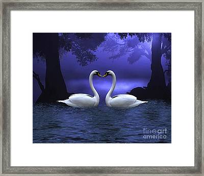 Swan Scene At Evening Framed Print