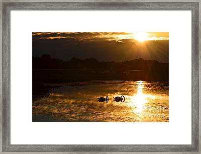 Swan Song Framed Print by AnnaJo Vahle