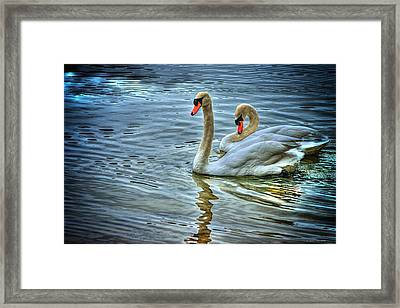 Swan Song Framed Print by Dennis Baswell