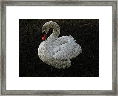 Swan Song Framed Print by Lenore Senior and Sharon Burger