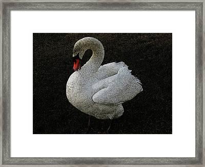 Swan Song Framed Print by Lenore Senior and Sharon Burger