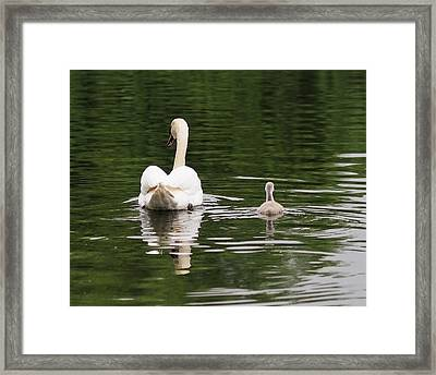 Swan Song Framed Print by Rona Black