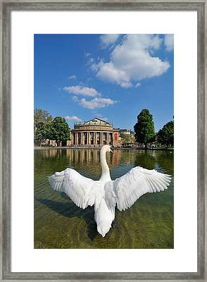 Swan Spreads Wings In Front Of State Theatre Stuttgart Germany Framed Print by Matthias Hauser