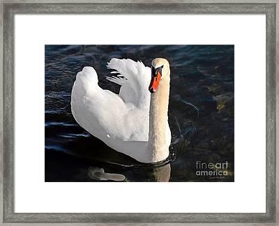 Swan With A Golden Neck Framed Print by Susan Wiedmann
