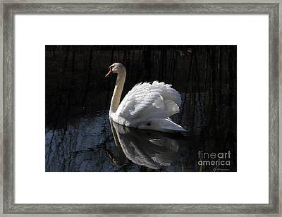 Swan With Reflection  Framed Print
