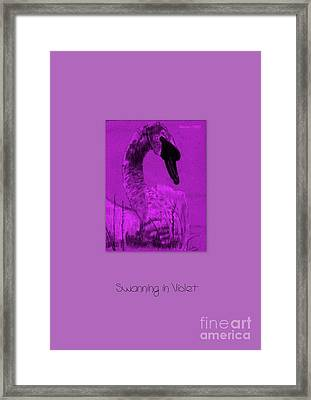 Framed Print featuring the photograph Swanning In Violet by Linda Prewer