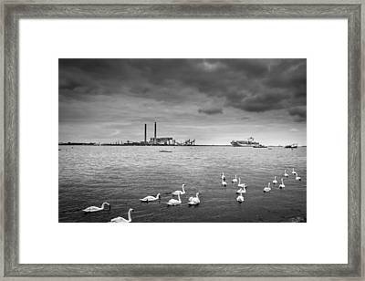 Swans And Ships. Framed Print by Gary Gillette